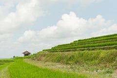 Rice taras przy Jatiluwih, Bali Zdjęcie Stock