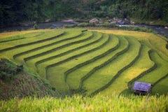 Rice taras w Wietnam Obraz Stock