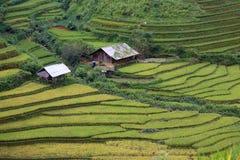 Rice taras w Wietnam Zdjęcia Stock