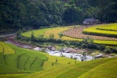 Rice taras w Wietnam Obraz Royalty Free