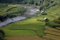 Rice taras w Wietnam Zdjęcie Royalty Free