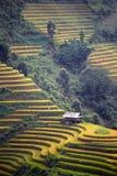 Rice taras w Wietnam Obrazy Stock