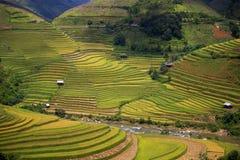 Rice taras w Wietnam Obrazy Royalty Free