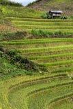 Rice taras w Wietnam Fotografia Stock