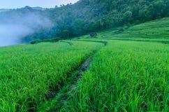 Rice tarasowa góra Zdjęcia Stock