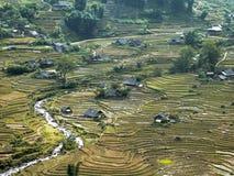 Rice tarasu pola Fotografia Royalty Free