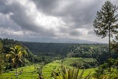 Rice tarasuje świątynnego Bali Indonezja Gunung Agung Obrazy Stock