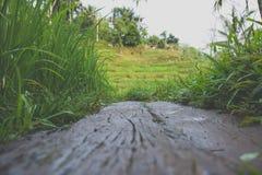 Rice tarasuje w Ubud, Bali, Indonezja Obraz Royalty Free