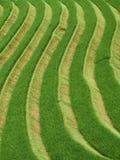 Rice tarasy i chałupa ryżowi irlandczycy na górach w porze deszczowej zdjęcia stock