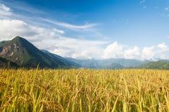 Rice tarasy w górach zdjęcie stock