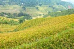 Rice tarasy w górach zdjęcia royalty free