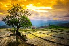 Rice tarasy w Tajlandia Rice pola na tarasowatym w rainny sezonie przy Chiang Mai Zdjęcie Stock