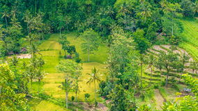Rice tarrace and small village in Sidemen, Bali, Indonesia Stock Images
