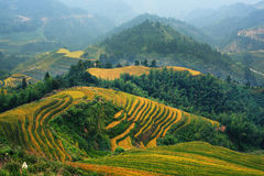 Rice terrace. In Guangxi China Stock Photography