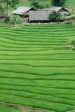 Rice Terrace. A scenery view of the rice terraces in Sapa, Vietnam Stock Images
