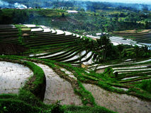 Rice terrace. Paddy field right after harvesting season in Jatiluwih, Bali Stock Images