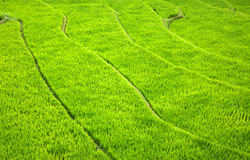 Rice Terrace Abstract Royalty Free Stock Photography