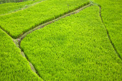 Rice Terrace Abstract Stock Image