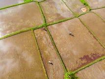 Rice Terrace Aerial Shot. Image of beautiful terrace rice field.  stock photo