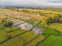 Rice Terrace Aerial Shot. Image of beautiful terrace rice field.  royalty free stock photo