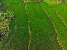 Rice Terrace Aerial Shot. Image of beautiful terrace rice field.  royalty free stock image
