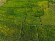 Rice Terrace Aerial Shot. Image of beautiful terrace rice field.  royalty free stock photos