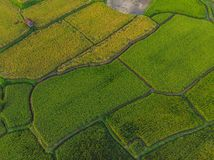 Rice Terrace Aerial Shot. Image of beautiful terrace rice field.  royalty free stock photography