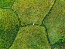 Rice Terrace Aerial Shot. Image of beautiful terrace rice field.  stock photos