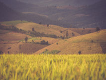 Rice terrace in Asia Stock Photography