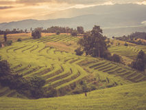 Rice terrace in Asia Royalty Free Stock Photos