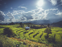 Rice terrace in Asia Royalty Free Stock Photography