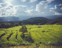 Rice terrace in Asia Stock Photos