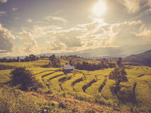 Rice terrace in asia with vintage style filter effect Royalty Free Stock Photo