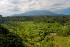 Rice terrace in Bali Stock Photo