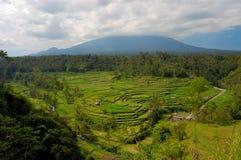 Rice terrace in Bali. Famous rice terrace near tirtagangga in Bali Indonesia Stock Photo