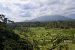 Rice terrace in Bali. Famous rice terrace near tirtagangga in Bali Indonesia Stock Image