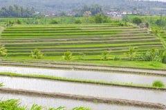 Rice terrace ,Bali Royalty Free Stock Photo
