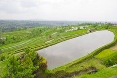 Rice terrace ,Bali Stock Photo