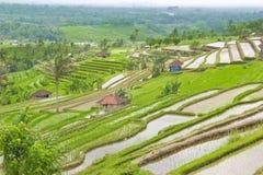 Rice terrace ,Bali Stock Photos