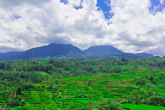 Rice terrace in Bali Royalty Free Stock Photo