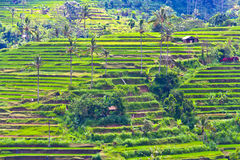 Rice terrace in Bali Stock Photos