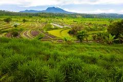 Rice terrace of Bali Royalty Free Stock Photo