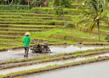 Rice terrace Bali Jatiluwih Stock Photo