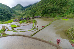 Rice terrace in banaue Stock Images