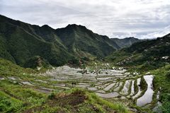 Rice Terraces - Batad, Philippines. Rice Terrace in Batad, Philippines. It is the beautiful scenery which is the UNESCO world heritage. Real life in the province Royalty Free Stock Images