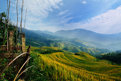 Rice terrace with blue sky Stock Photography