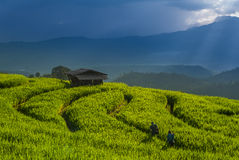 Rice terrace at Chiang Mai. The farm on the mountain Stock Images