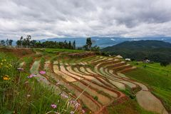 Rice terrace at Chiang mai Royalty Free Stock Image