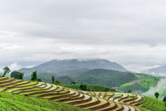 Rice terrace Stock Photography