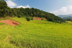 Rice terrace in chiangmai thailand Stock Photo